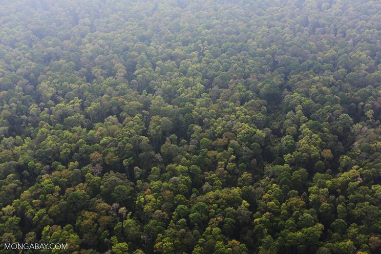 Peat forest in Giam Siak Kecil [riau_0743]