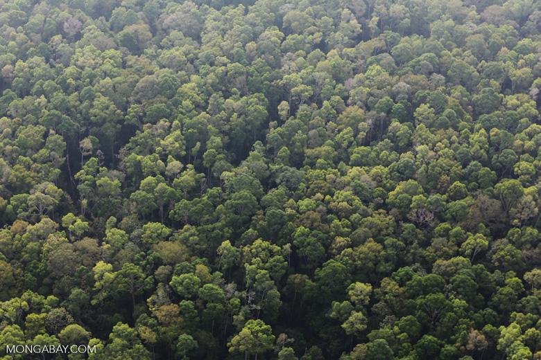 Peat forest in Giam Siak Kecil [riau_0745]