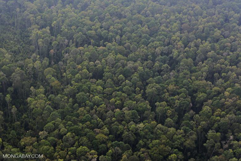 Peat forest in Giam Siak Kecil [riau_0752]