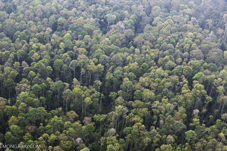 Peat forest in Giam Siak Kecil [riau_0753]