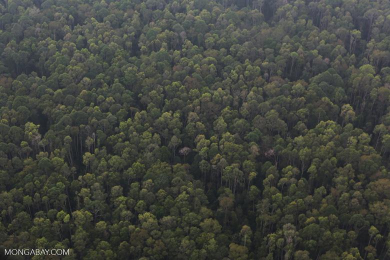 Peat forest in Giam Siak Kecil [riau_0760]