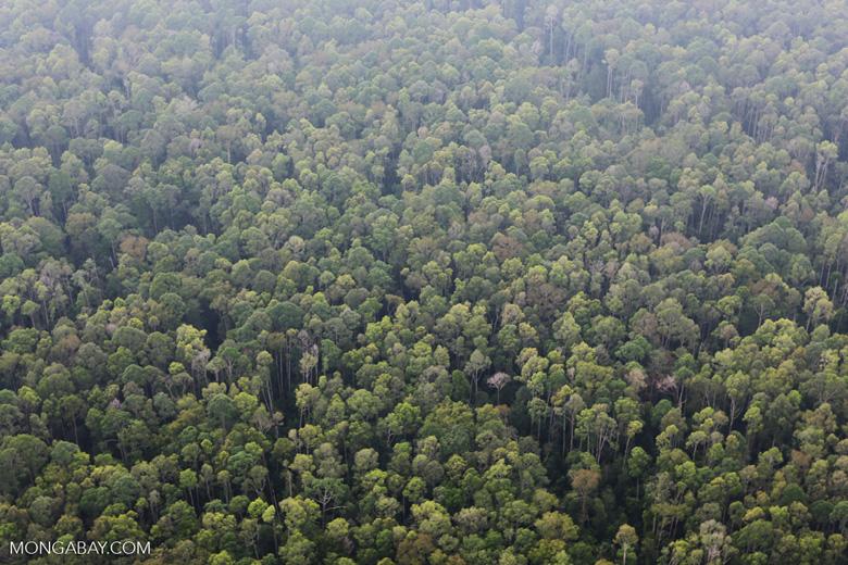 Peat forest in Giam Siak Kecil [riau_0761]
