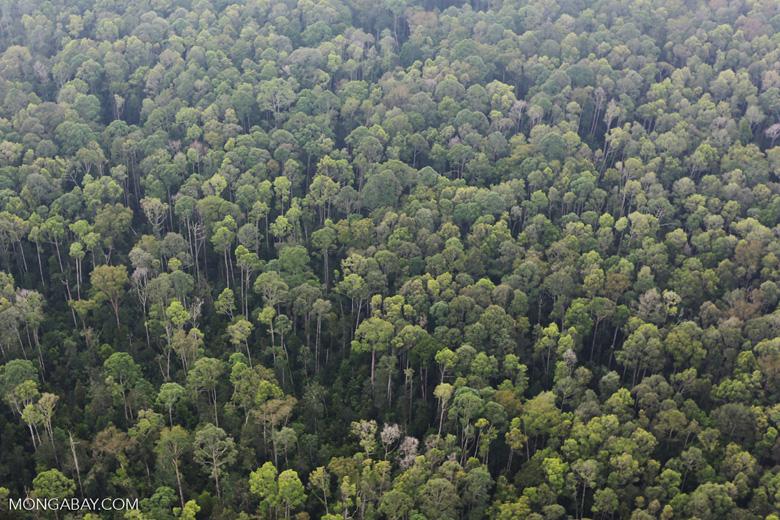 Peat forest in Giam Siak Kecil [riau_0763]