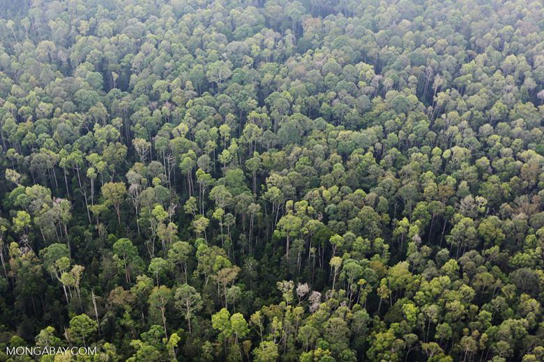 Peat forest in Giam Siak Kecil [riau_0766]