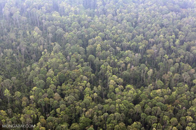 Peat forest in Giam Siak Kecil [riau_0774]
