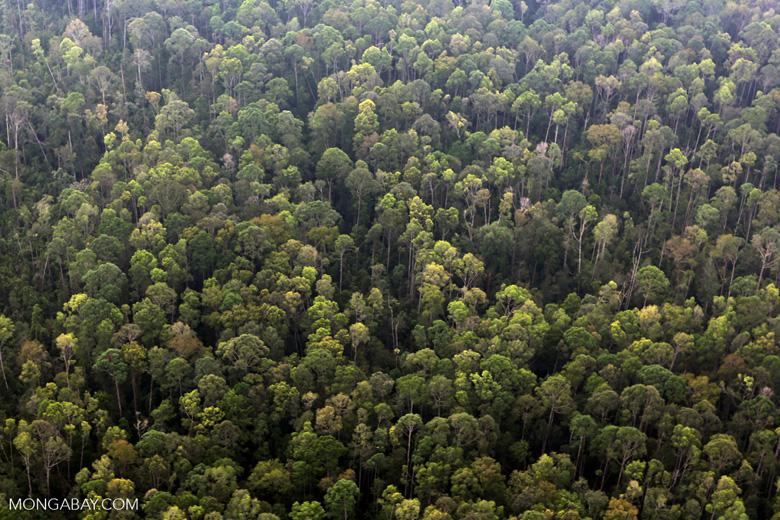 Peat forest in Giam Siak Kecil [riau_0775]