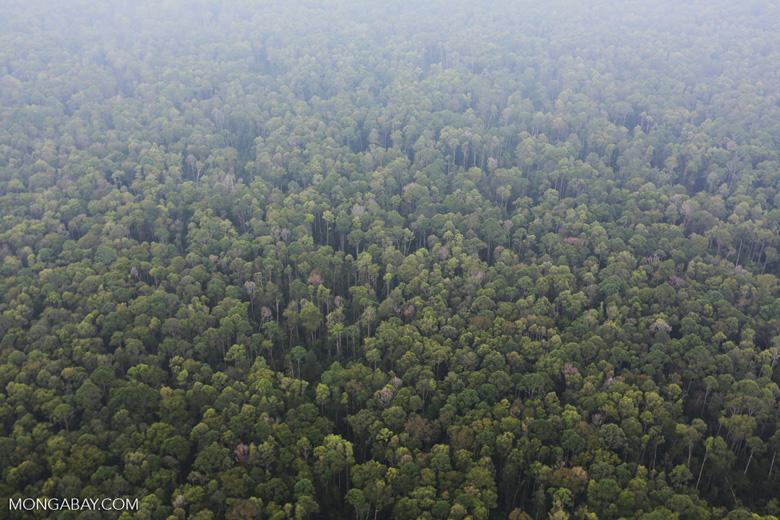 Peat forest in Giam Siak Kecil [riau_0779]
