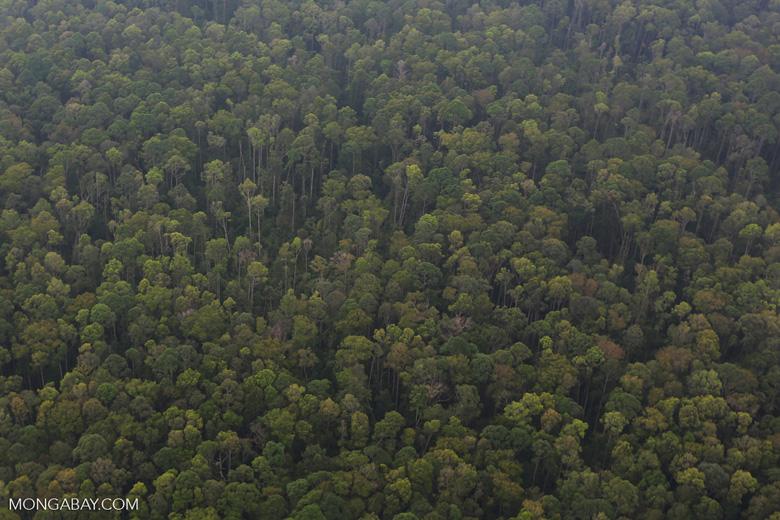 Peat forest in Giam Siak Kecil [riau_0785]