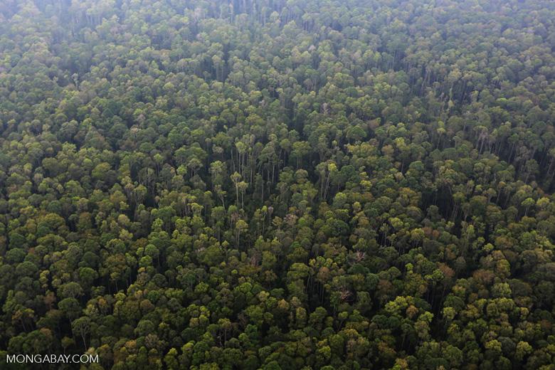 Peat forest in Giam Siak Kecil [riau_0786]