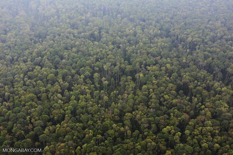 Peat forest in Giam Siak Kecil [riau_0787]