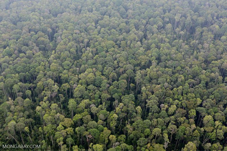 Peat forest in Giam Siak Kecil [riau_0789]