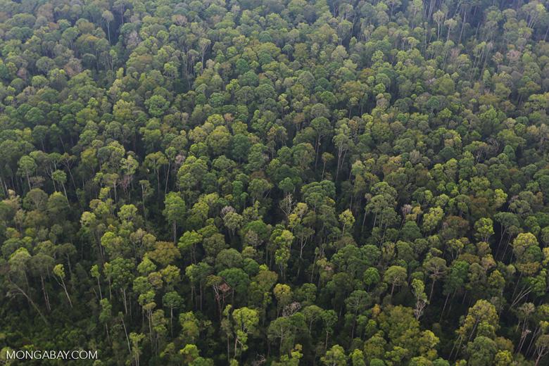 Peat forest in Giam Siak Kecil [riau_0790]