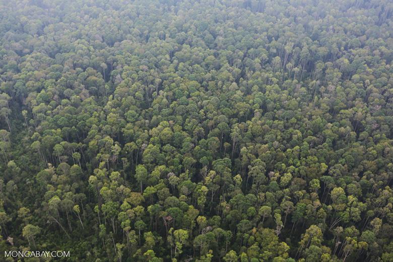 Peat forest in Giam Siak Kecil [riau_0791]