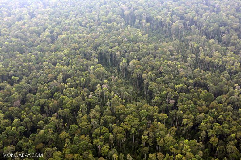 Peat forest in Giam Siak Kecil [riau_0805]