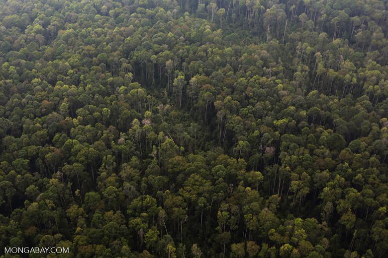 Peat forest in Giam Siak Kecil [riau_0806]
