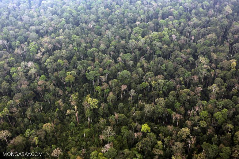 Peat forest in Giam Siak Kecil [riau_0825]