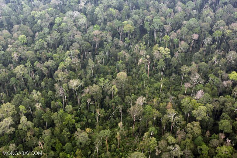 Peat forest in Giam Siak Kecil [riau_0831]