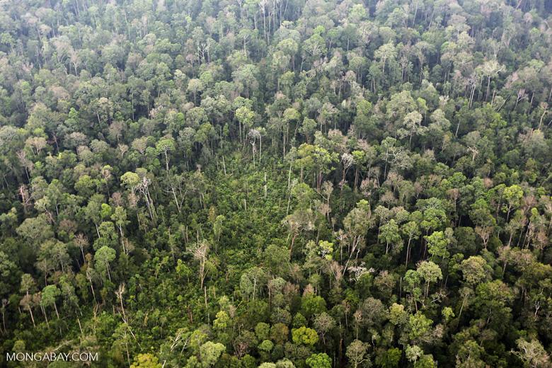Peat forest in Giam Siak Kecil [riau_0834]