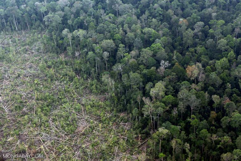 Peat forest clearing in Riau [riau_0842]