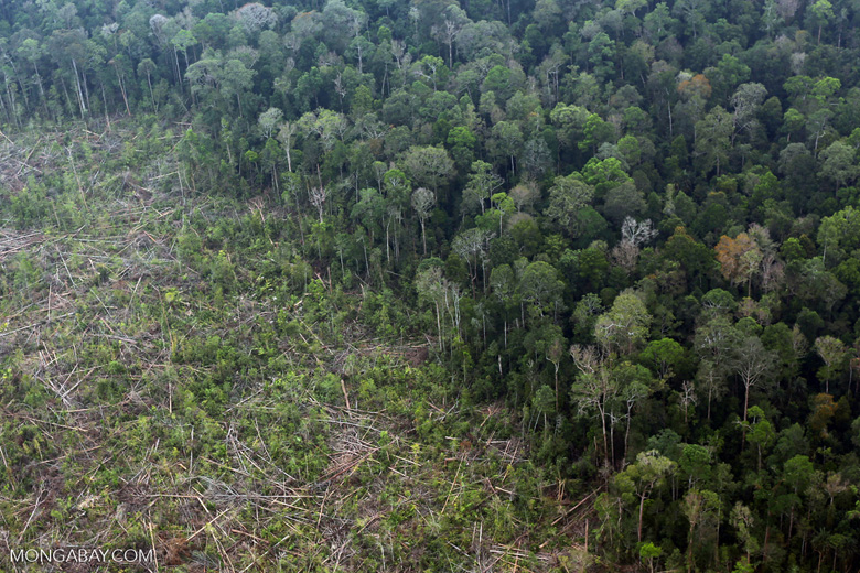 Peat forest clearing in Riau [riau_0843]