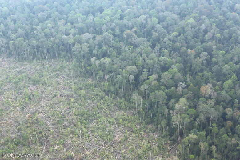 Peat forest clearing in Riau [riau_0849]