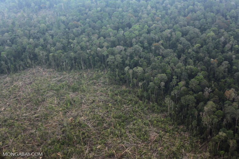 Peat forest clearing in Riau [riau_0850]