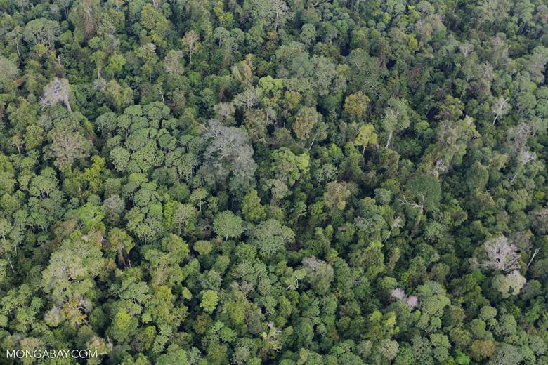 Riau rainforest [riau_0883]