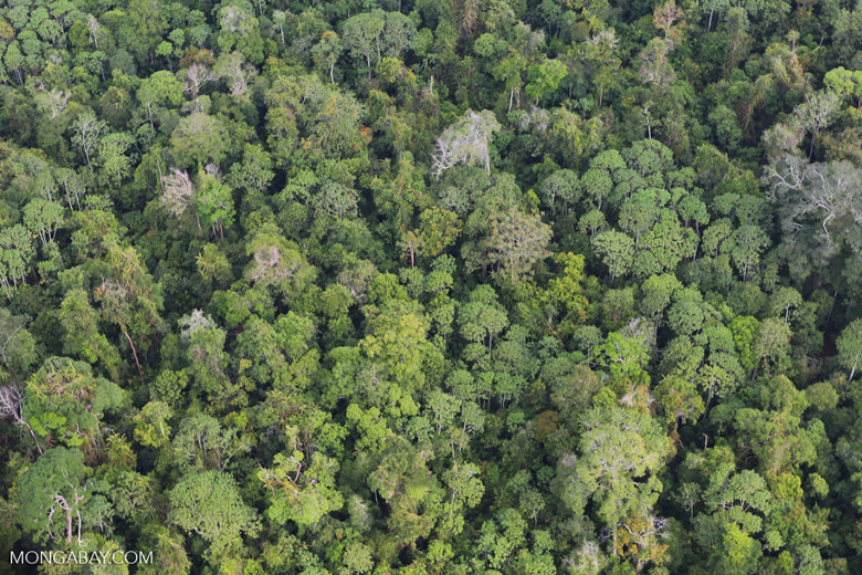 Riau rainforest [riau_0887]