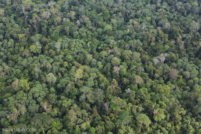 Riau rainforest [riau_0890]