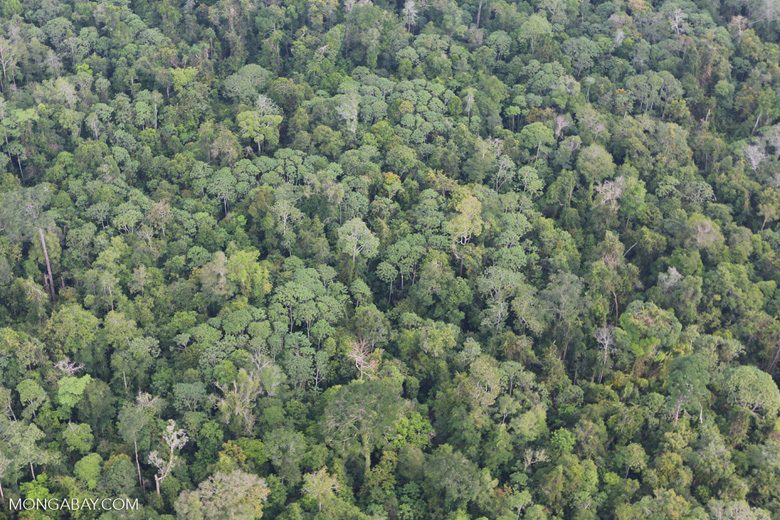 Riau rainforest [riau_0892]