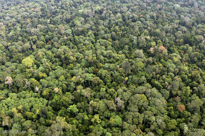 Riau rainforest [riau_0899]