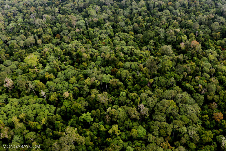 Riau rainforest [riau_0900]