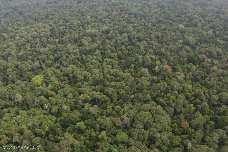 Riau rainforest [riau_0901]