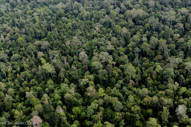 Riau rainforest [riau_0903]