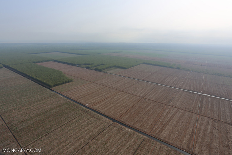 Acacia plantation in Riau [riau_0924]