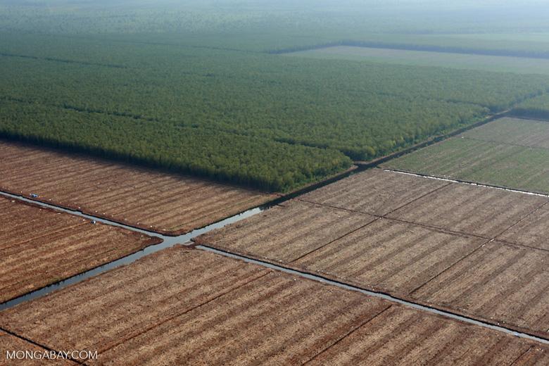 Acacia plantation in Riau [riau_0939]