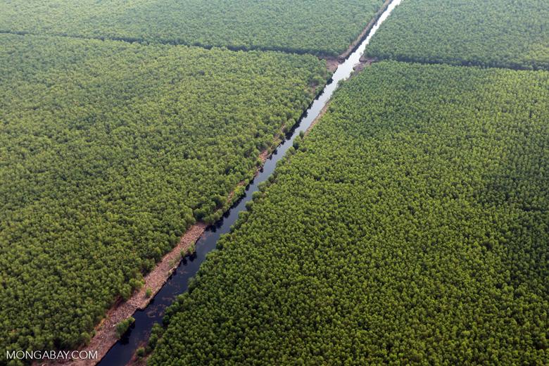 Acacia plantation in Riau [riau_0977]
