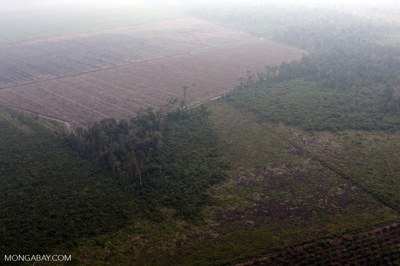 Deforestation for plantations in Riau [riau_1000]