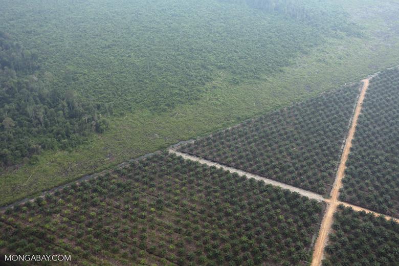 Deforestation for plantations in Riau [riau_1004]