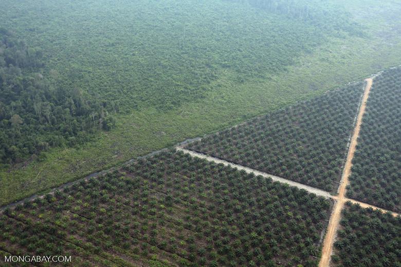 Deforestation for plantations in Riau