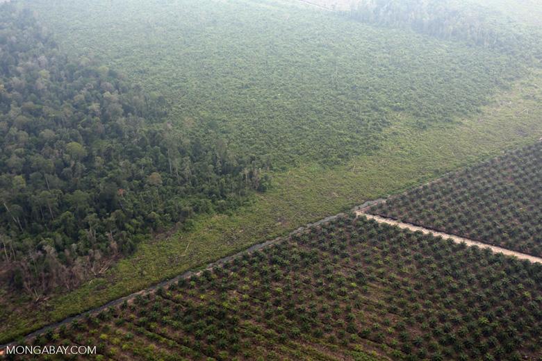 Deforestation for plantations in Riau [riau_1007]