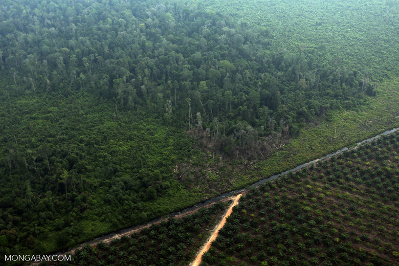Deforestation for plantations in Riau [riau_1013]