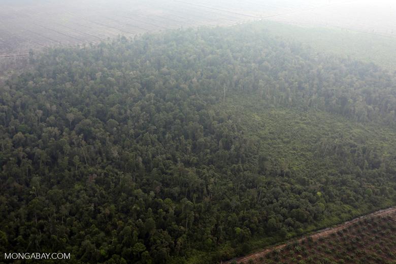 Deforestation for plantations in Riau [riau_1016]