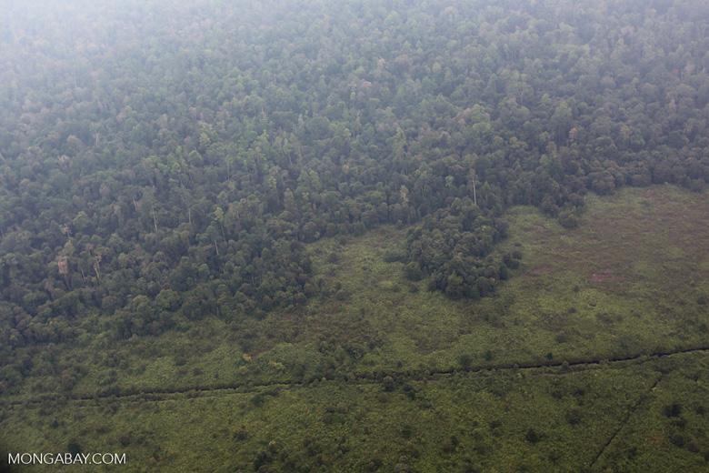 Peatforest deforestation [riau_1024]