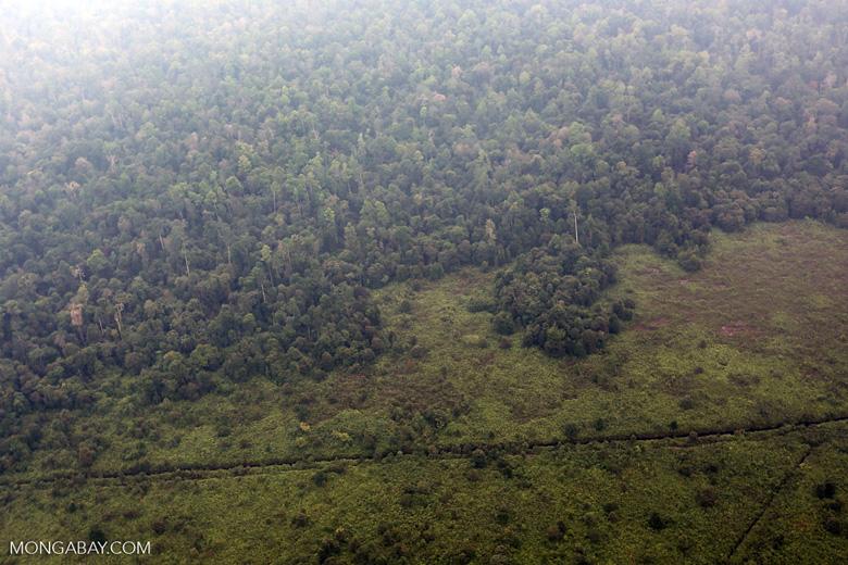 Peatforest deforestation