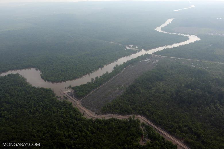 Deforestation along a lowland river [riau_1037]