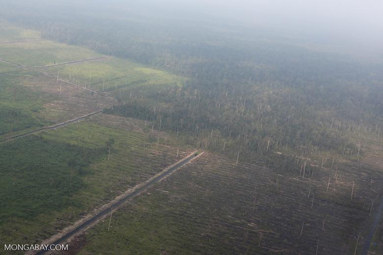 Peatlands destruction in Riau [riau_1055]
