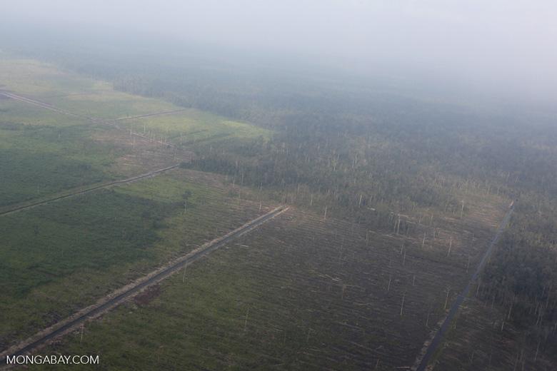 Peatlands destruction in Riau [riau_1056]