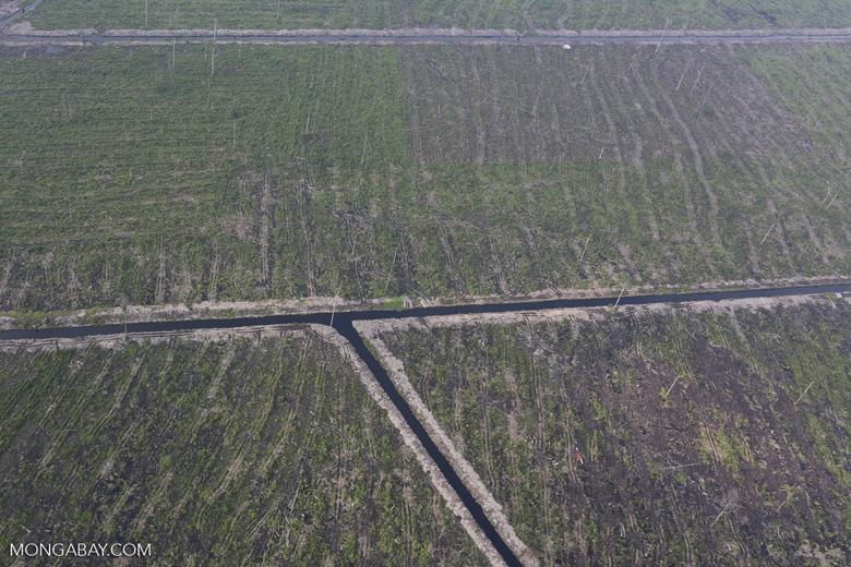 Peatlands destruction in Riau [riau_1057]