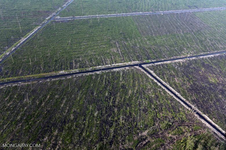 Peatlands destruction in Riau [riau_1060]
